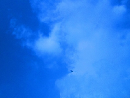 stupendous: bird in cloud