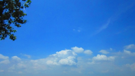 stupendous: tree and blue sky