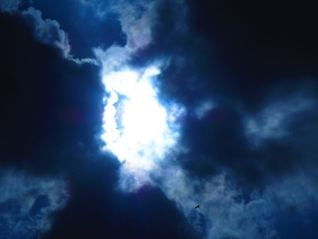 stupendous: Bird flying towards Amazing bright sun in blue cloudy sky