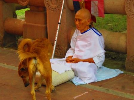 Monk praying at Mahabodhi temple, Bodhgaya. Shot at 1227 pm on 11.08.12 at Bodhgaya, Bihar, India, Asia.