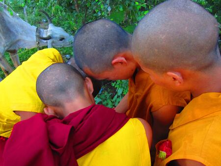 Children monks watching video clips on mobile. Shot at 1809 pm on 11.08.12 at Bodhgaya, Bihar, India, Asia.