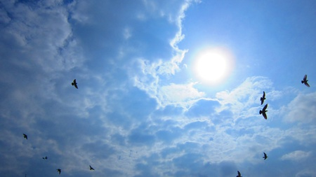 BIRDS FLYING IN BRIGHT SUNNY SKY. photo