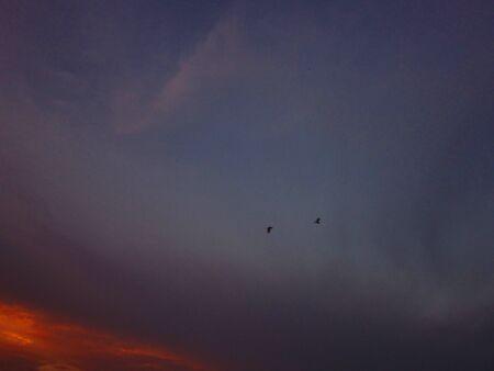 returning: two birds returning home at  sunset warm Stock Photo