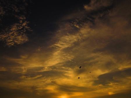stupendous: GOLDEN SUNset-birds flying