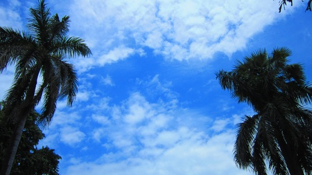 stupendous: TREES AND BRIGHT CLOUDY SKY