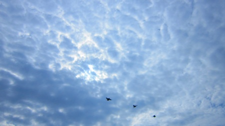 stupendous: BIRDS FLYING IN CLOUDY SKY Stock Photo