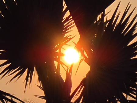 stupendous: GLOWING SUNSRISE SEEN THROUGH TREES