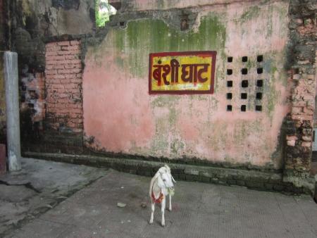 bihar: BANSHIGHAT. SHOT AT MORNING HOURS ON 03 NOVEMBER 2012 AT  PATNA, BIHAR, INDIA Editorial