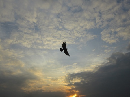 BIRD FLYING AT AMAZING SUNSET