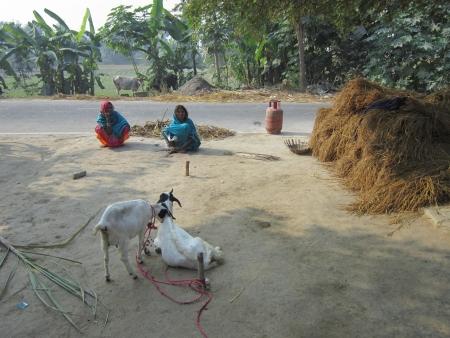 bihar: WOMAN SITTING IN RURAL VILLAGE.SHOT AT VAISHALI, BIHAR, INDIA: AFTERNOON HOURS ON NOVEMBER 20,2012. Editorial