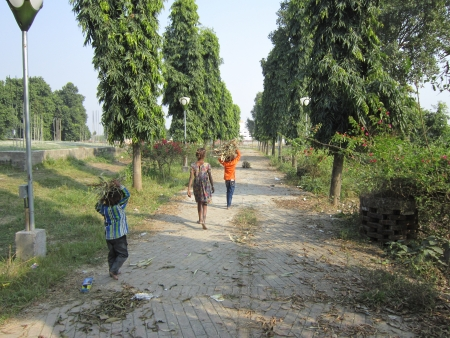 woodcutter: WOODCUTTER CHILDREN WALKING BACK.SHOT AT VAISHALI, BIHAR, INDIA: AFTERNOON HOURS ON NOVEMBER 20,2012.