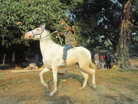 sonepur: YOING MAN RIDING HORSE.SHOT DURING MORNING HOURS ON 02.12.12 AT SONEPUR FAIR, SONEPUR, BIHAR, INDIA.