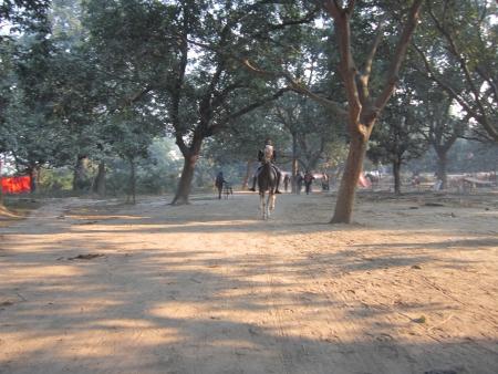 sonepur fair: RIDNIG HORSE AT FAIR.SHOT DURING MORNING HOURS ON 02.12.12 AT SONEPUR FAIR, SONEPUR, BIHAR, INDIA.