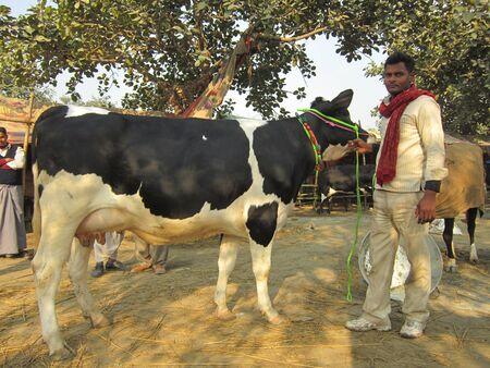 sonepur fair: MAN SELLING COW.SHOT DURING MORNING HOURS ON 02.12.12 AT SONEPUR FAIR, SONEPUR, BIHAR, INDIA. Editorial