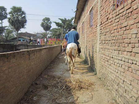sonepur fair: HORSE RIDER IN A SMALL LANE.SHOT DURING MORNING HOURS ON 02.12.12 AT SONEPUR FAIR, SONEPUR, BIHAR, INDIA.