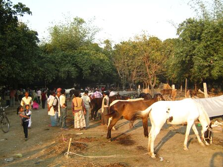 sonepur fair: HORSES FOR SELL AT FAIR.SHOT DURING AFTERNOON HOURS ON 02.12.12 AT SONEPUR FAIR, SONEPUR, BIHAR, INDIA. Editorial