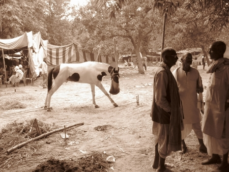 sonepur: HORSE SELLERS INTERACTING BETWEEN THEM. SHOT DURING AFTERNOON HOURS ON 02.12.12 AT SONEPUR, BIHAR, INDIA.
