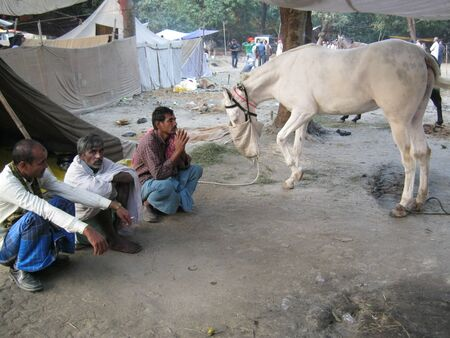sonepur: HORSE SELLER AND A WHITE HORSE. SHOT DURING AFTERNOON HOURS ON 02.12.12 AT SONEPUR, BIHAR, INDIA.