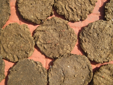 dung: COW DUNG CAKE