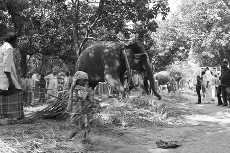indian fair: Sonepur Fair. Travel photo in black and white, Shot at Sonepur, Bihar, Afternoon hours on. 08.11.2014.
