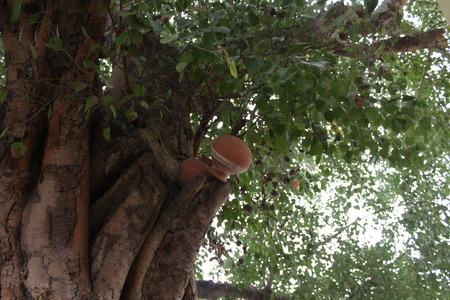 rites: Pindidan, Hindu last rites at Punpun.