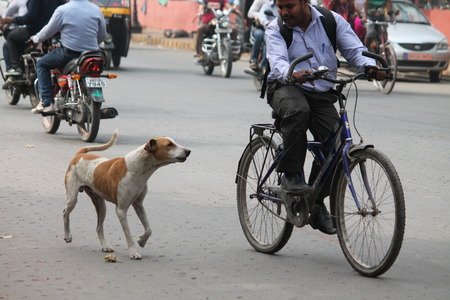 chased: Chased by dog. Street photo, Shot at Gandhi Maidan, Patna, Bihar, India on 25.02.15 at afternoon hours.