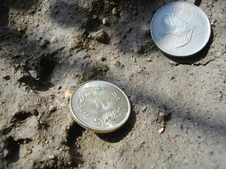 marginal: Indian coin. Stock Photo