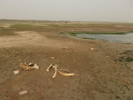 alluvial: Pollution river Ganges Patna, Nov 2015.