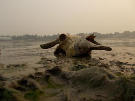 alluvial: River Ganges, Patna 2015.