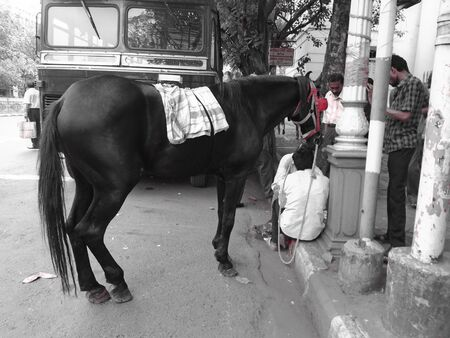 Kala Ghoda. Travel Kolkata. Dalhousie afternoon, March 2017.