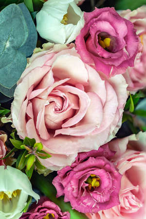 Macro photography of blossom roses, pink and whites.