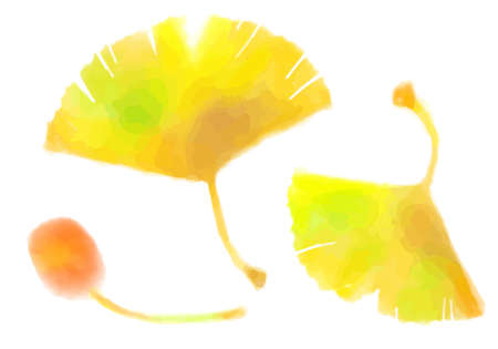 Watercolor Ginkgo and Ginkgo Cutout Illustrations  イラスト・ベクター素材