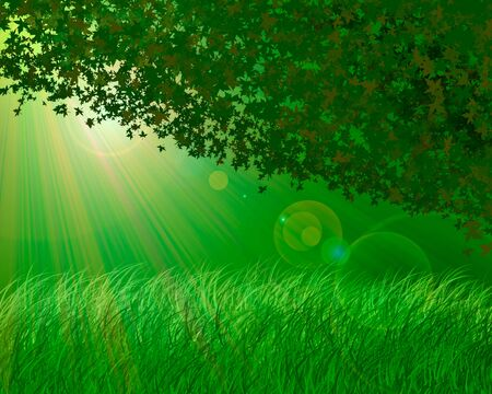 Abstract forest background photo