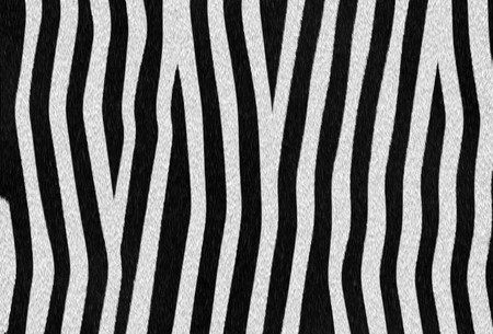 Abstract raster zebra texture background photo