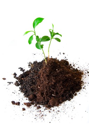 emerging economy: Baby plant in soil on white background Stock Photo