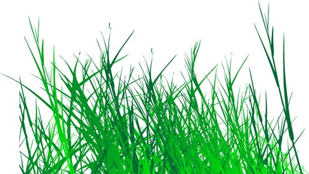 grass vector on white background Vector