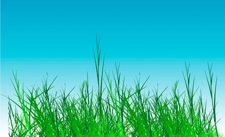 grass vector on sky background Vector