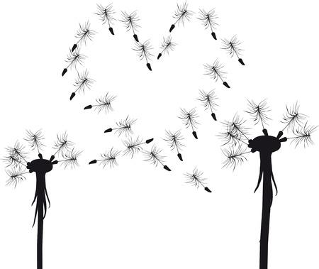 flora vector: Silhouette of  love dandelion concept Illustration