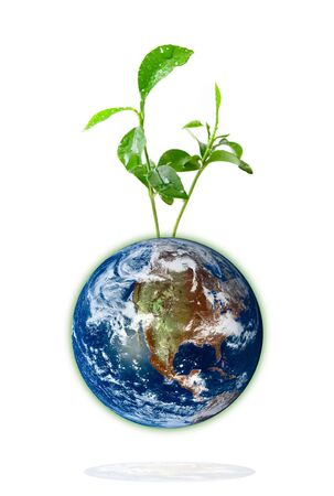 Baby plant growing from the earth over a white background.
