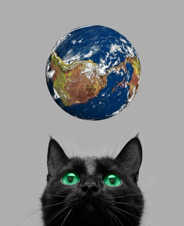 Black cat playing with earth planet on grey photo