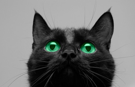 Close-up of black cat look up Stock Photo - 4297870