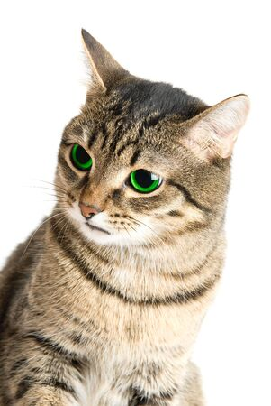 Beauty Cat with green eyes on white photo