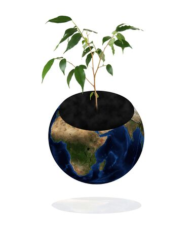protect the environment concept. Earth with tree isolated on white background. Stock Photo - 4796957