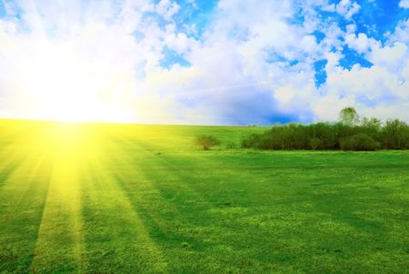 field of green grass on a background a sunrise