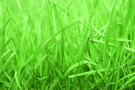 Close up of Rich green Grass  background Stock Photo - 4831269