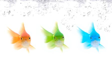 Different color fishes isolated on white photo