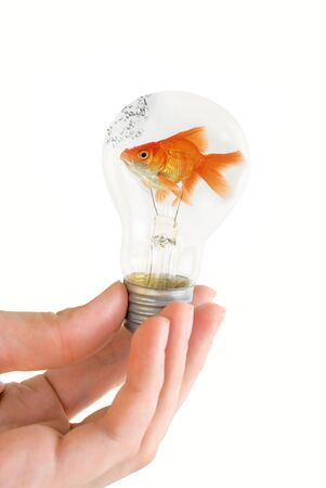 fish isolated: hand holding a light bulb with swimming fish isolated on white background