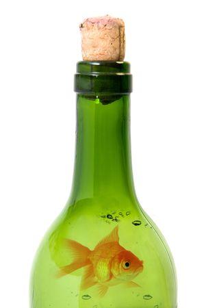 Bottle of wine and goldfish  isolated over white background photo