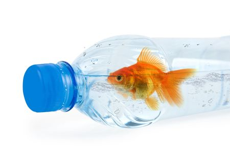 Close up of bottle with drinking water and swiming there gold fish isolated on white photo