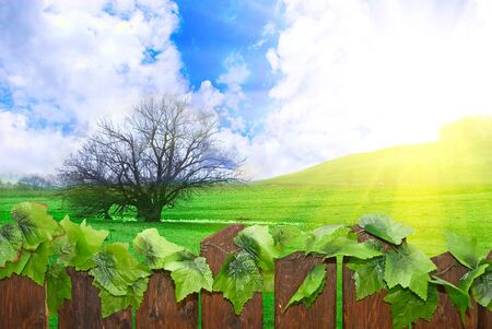 wood paling and sunny landscape Stock Photo - 5099334